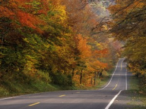 fall-leaves-frame-the-roadway